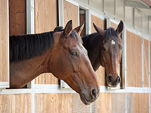 Integrierte Pferdeboxen
